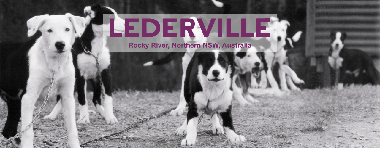 Working Dogs of Lederville